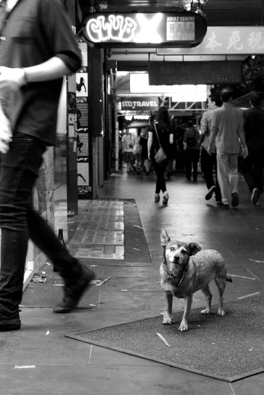 Waiting patiently in Swanston Street...