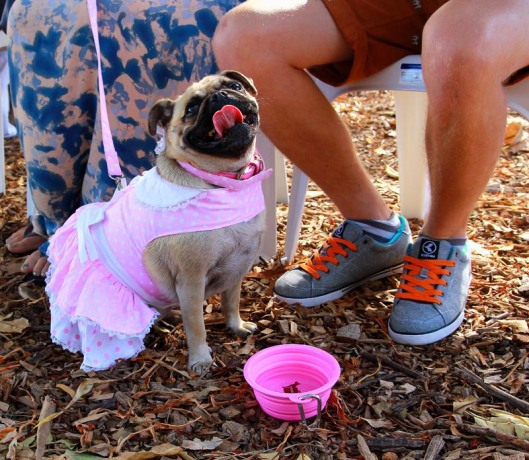 Puggishly perfect in pink.....