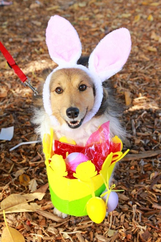 Super Easter Bunny Dog....