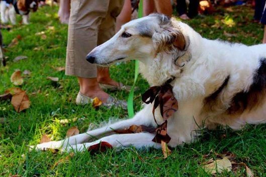 Elegant Dogs